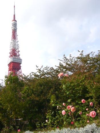 東京タワーとバラ1.jpg