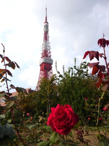 東京タワーとバラ2.jpg