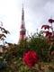 東京タワーとバラ2ss.jpg