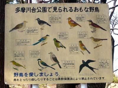 54野鳥.jpg