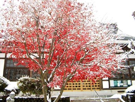 雪と紅葉.jpg