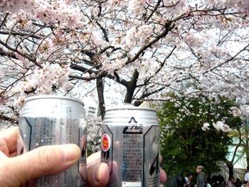 ビールと桜.jpg