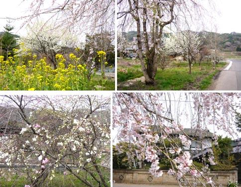 A02花.jpg