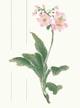 花の便箋s.jpg