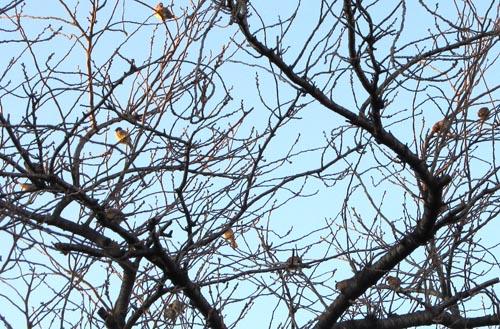 雀と木.jpg