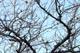 雀と木s.jpg