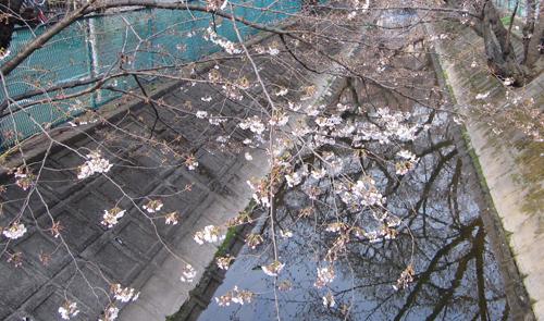 06桜.jpg