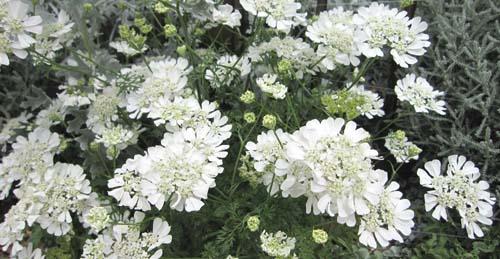 02白い花.jpg