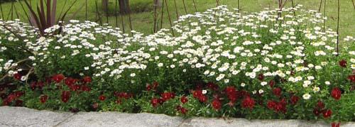 08白い花.jpg