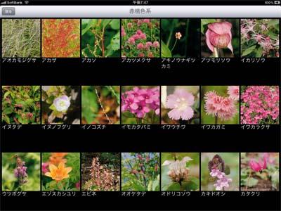 山野草.jpg