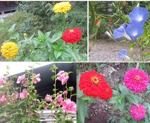 07 本家の花.jpg