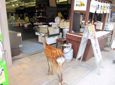 013店に入る鹿s.jpg