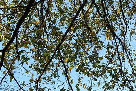 07木の葉.jpg