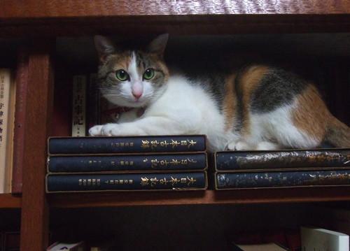 書庫猫みや.jpg