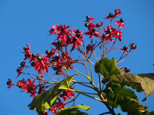 11秋の花.jpg