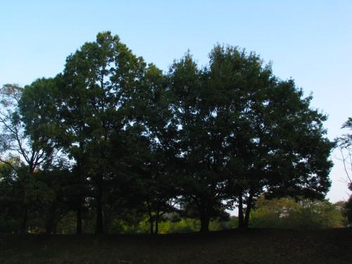 18木々.jpg