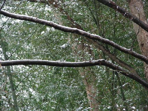 18雪景色.jpg