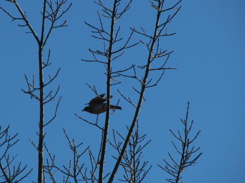19鳥木.jpg