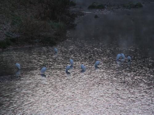 20柳瀬川.jpg