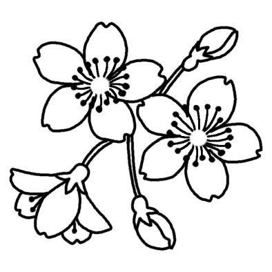 桜 イラスト2.jpg